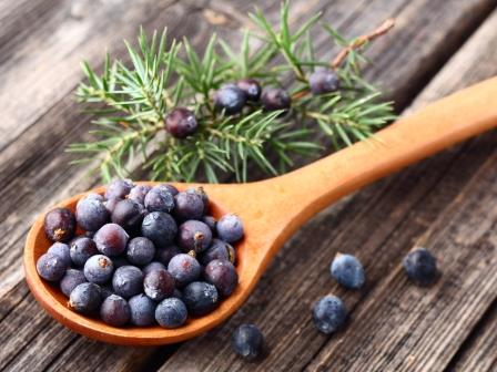 Juniper Berries - Gin